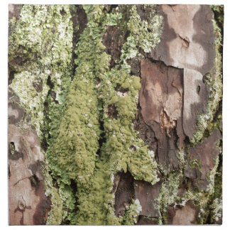 East Coast Pine Tree Bark Wet From Rain with Moss Napkin