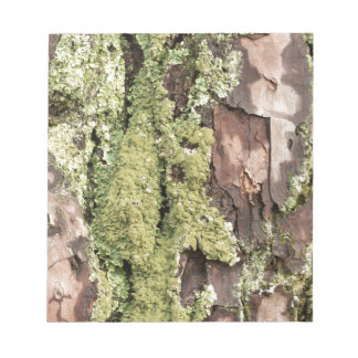 East Coast Pine Tree Bark Wet From Rain with Moss Notepad