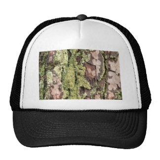 East Coast Pine Tree Bark Wet From Rain with Moss Trucker Hat