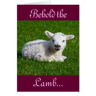 Easter Behold the Lamb I Greeting Cards