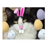 Easter Black & White Cat Postcard