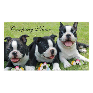 Easter Boston terriers Pack Of Standard Business Cards