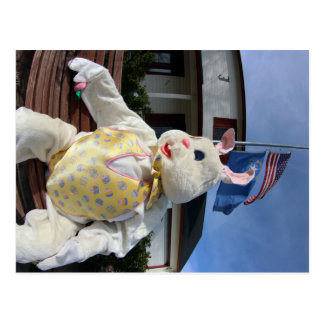 Easter Bunny and Flags Postcard