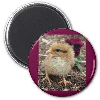 Easter Chick-A-Dee-Light I Refrigerator Magnet