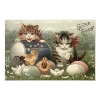 Easter Chick Colored Egg Kitten Cat Art Photo