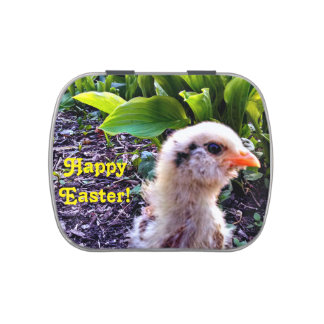 Easter Chick Jelly Belly Candy Tin