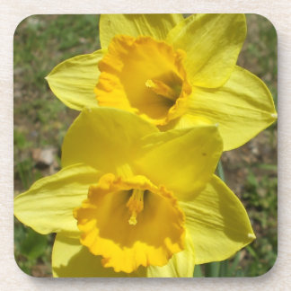 Easter  Daffodils Cork Coaster
