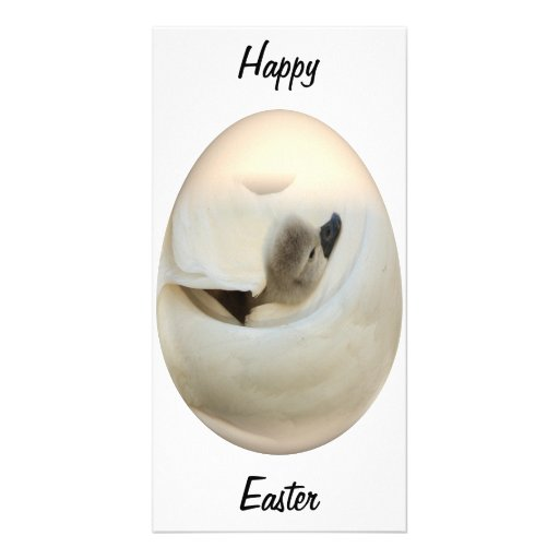 easter egg baby swan photo cards