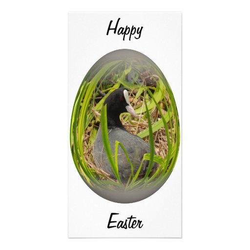 easter egg coot on her nest customized photo card