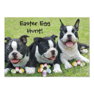 Easter Egg Hunt Boston Terrier Dogs  invitations