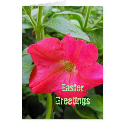 Easter greetings,Happy Easter, red petunia flower. Greeting Cards