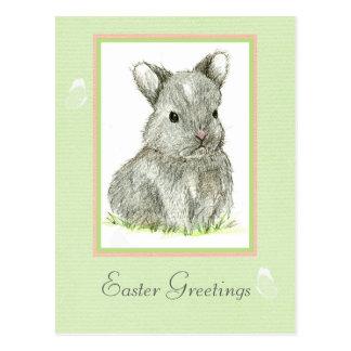 Easter Greetings Postcard Grey Baby Bunny Rabbit