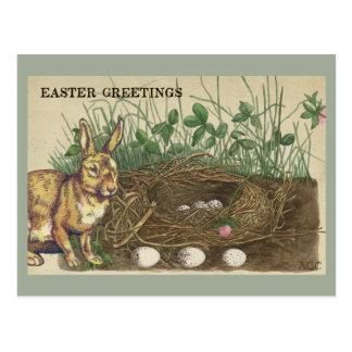 Easter Greetings rabbit, eggs, nest, grass, clover Postcard
