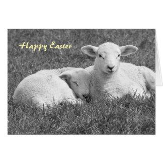 Easter Lamb greeting card