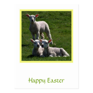 Easter Lambs Postcard