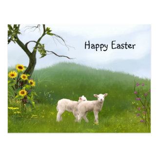 Easter Lambs Postcard