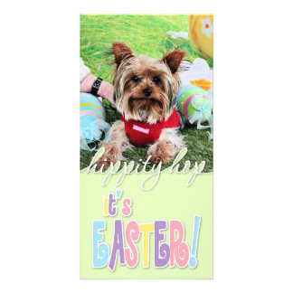 Easter - Yorkshire Terrier - Sassy Photo Cards