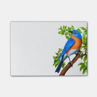 Eastern Bluebird Art Notes