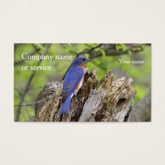 Eastern Bluebird Business Card