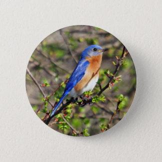 Eastern Bluebird Button