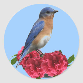 Eastern Bluebird Camellia Sticker
