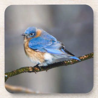 Eastern Bluebird Hard Plastic Drink Coaster