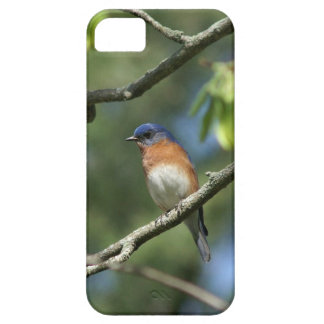 Eastern Bluebird iPhone 5 Barely There Case