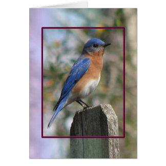 Eastern Bluebird Male Card