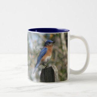Eastern Bluebird Male Mug