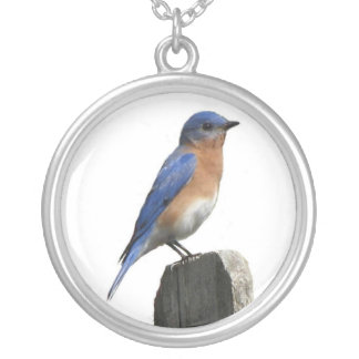Eastern Bluebird Male Silver Plated Necklace