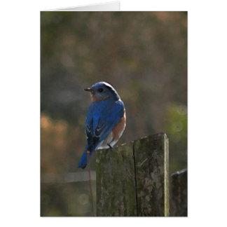 Eastern Bluebird Note Card