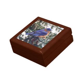 Eastern Bluebird on Holly Keepsake Gift Box