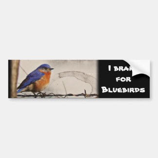 Eastern Bluebird Photo Bumper Sticker