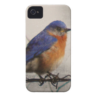 Eastern Bluebird Photo Case-Mate iPhone 4 Cases