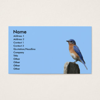 Eastern Bluebird Profile Card