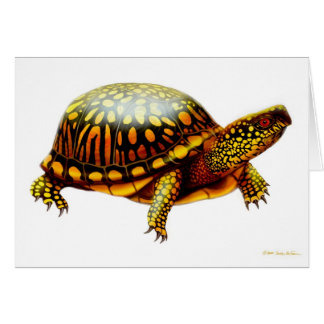 Eastern Box Turtle Card