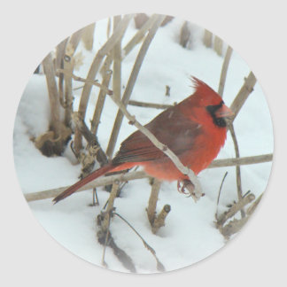 Eastern Cardinal Songbird Coordinating Items Classic Round Sticker