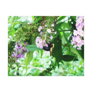 Eastern Carpenter Bee on Salvia flower Canvas Print