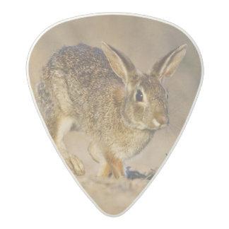 Eastern cottontail rabbit hopping acetal guitar pick