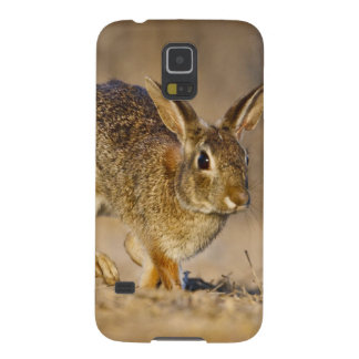 Eastern cottontail rabbit hopping galaxy s5 case