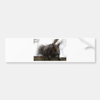 Eastern Gray Squirrel Bumper Sticker
