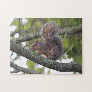 Eastern Gray Squirrel Jigsaw Puzzle