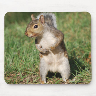 Eastern Gray Squirrel mousepad