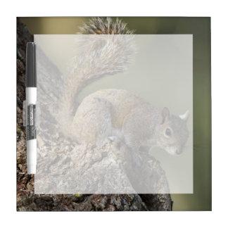Eastern Gray Squirrel, or grey squirrel Dry Erase Boards
