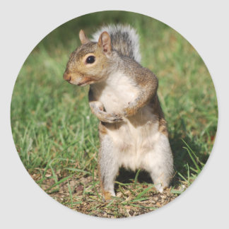 Eastern Gray Squirrel sticker