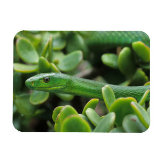 Eastern Green Mamba (Dendroaspis Angusticeps) Magnet