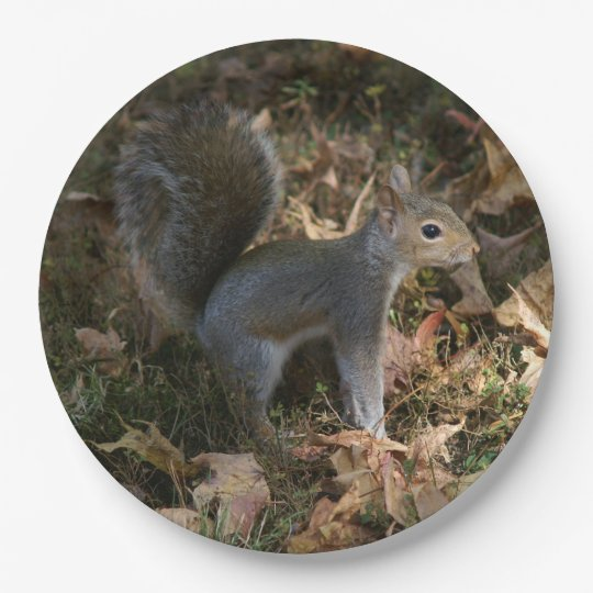 Eastern Grey Squirrel, Paper Plates. 9 Inch Paper Plate