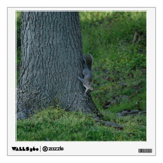 Eastern Grey Squirrel, Wall Decal. Wall Decal