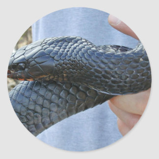 Eastern indigo snake (Drymarchon corais couperi) Classic Round Sticker
