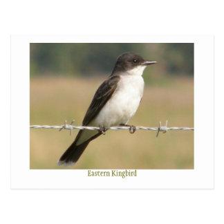 Eastern Kingbird Postcard